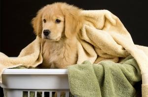 Baña a tu mascota: Autoservicio en baño para mascotas
